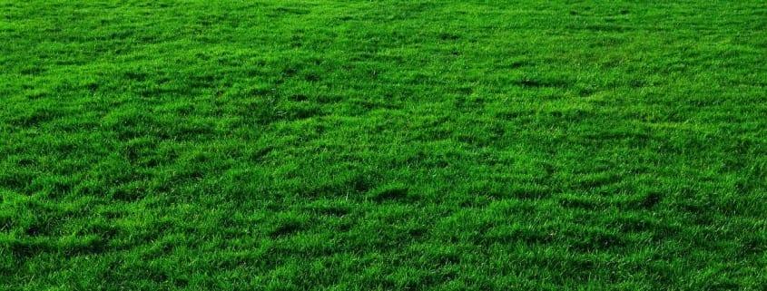 Grön tomt till attefallshuset